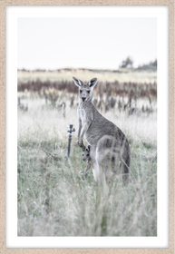 kangaroo-bond