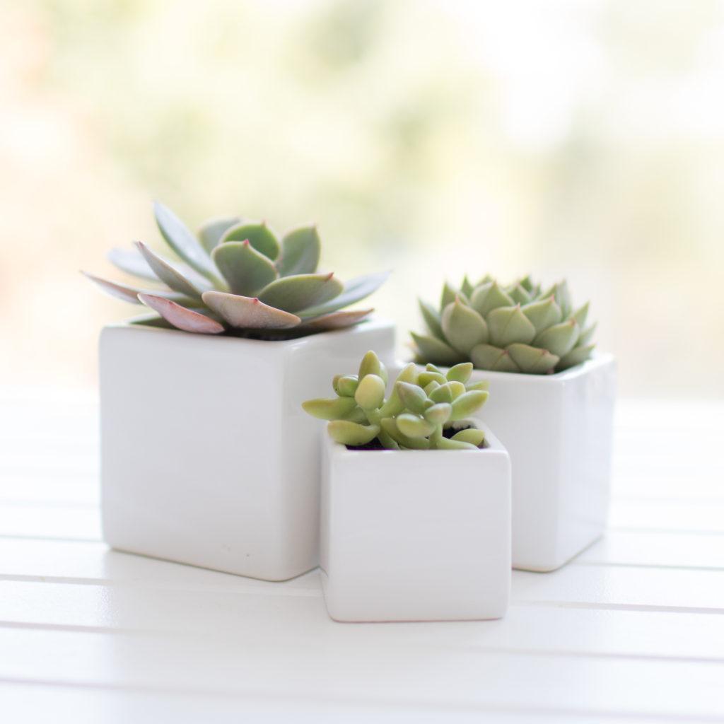 mini-ceramic-planter-cubes